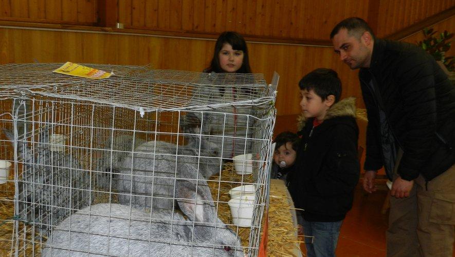 Déjà bien présents l'an dernier, les lapins seront majoritairessur cette exposition 2019./Photo archives.