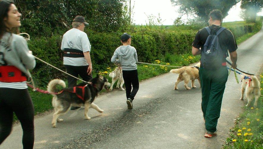 Une marche avec des chiens