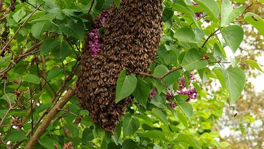 Les pollinisateurs en danger.