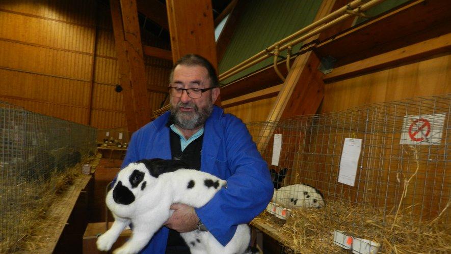 Aujourd'hui (ouverture de 9 heures à 19 heures) et demain (9 heures à 17 heures), à la salle des fêtes de Treize-Pierres, se tient la 32e exposition d'animaux de basse-cour du Cercle avicole du Bas Rouergue et du Ségala. 126 éleveurs, venus de 20 départements, y présentent 1 293 animaux. Le lapin est en force et en majesté, notamment avec ce géant papillon français noir (1). On peut aussi admirer des poules (2), des canards (3) et de nombreuses espèces de pigeons (4). L'entrée est gratuite. Une tombola est organisée et une restauration proposée./Photos DDM