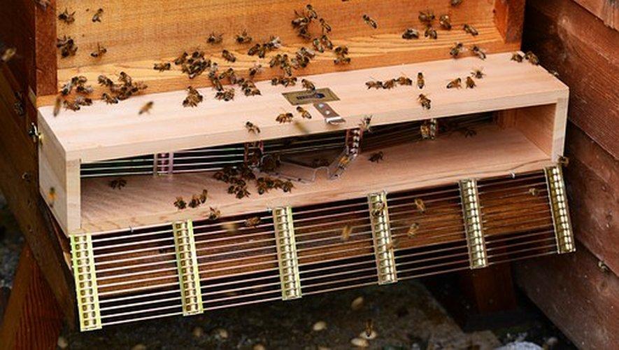 L'abeille, un insecte pollinisateur indispensable.