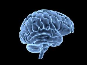 Neuromarketing : cette technique entend anticiper les préférences et décisions d'achats des consommateurs, grâce à l'imagerie cérébrale.