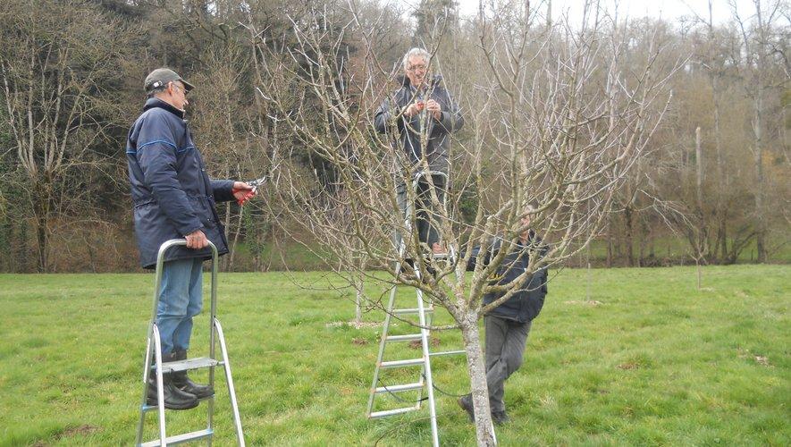 Greffe et taille d'arbres fruitiers vendredi