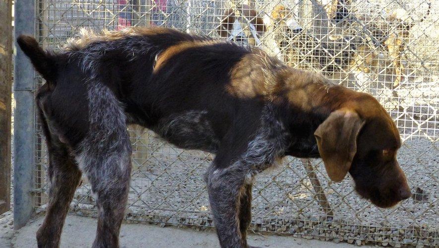 Ce chien, trouvé à Montrozier,  attend ses maîtres