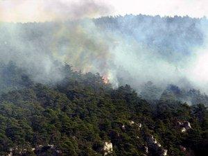 Le feu menaçait une forêt de sapins.