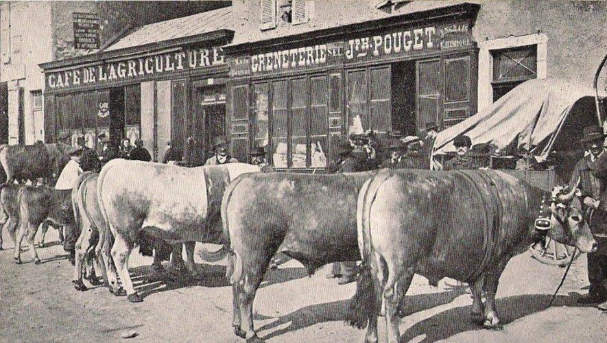 Les bœufs gras de Pâques, garants de la tradition