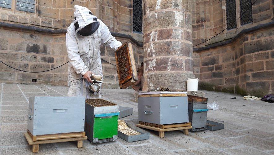 Des abeilles vivent et travaillent désormais sur les planètes de la cathédrale.
