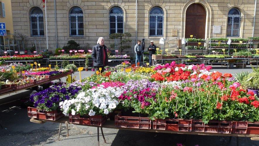 La place de la Mairie très colorée avec le marché aux fleurs.