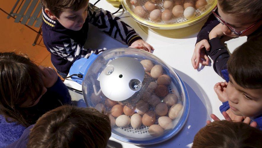 Une foire aux œufs et aux poussins le dimanche de Pâques, à la salle des fêtes de Treize-Pierres