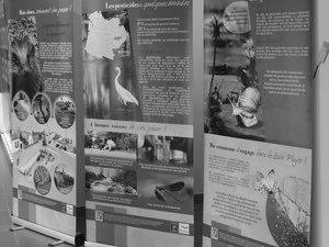 """Une exposition """"Zéro phytho"""" à voir à l'office de tourisme"""