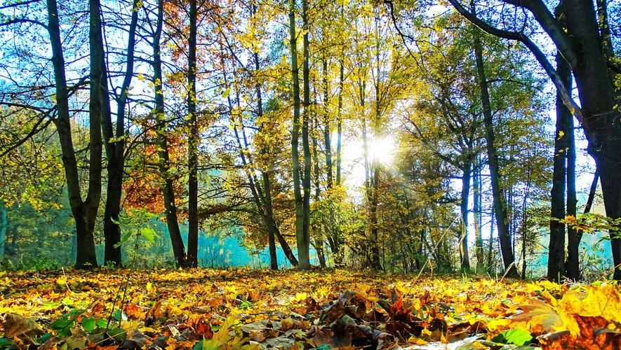 Generic: Automne, ChalLe score des candidats écologistes est en moyenne 31 % plus élevé dans une commune située dans un parc naturel que dans une ville dont le parc le plus proche se situe à 100 kmeur, arbre, tree, feuilles, leaves, Nature, forest, b