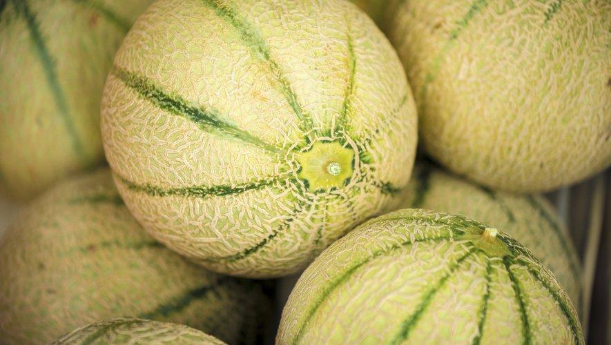 Le melon, dont la cote chute de 24%, enregistre la plus forte baisse de la semaine.