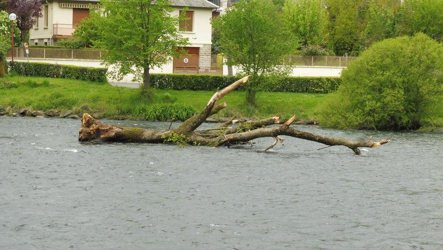 L'arbre est immobilisé dans le Lot.