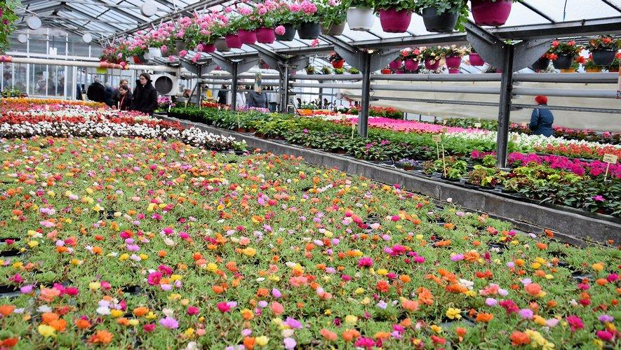 Des fleurs et des plantes par milliers