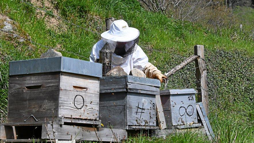 L'univers de la ruche. Un monde captivant.