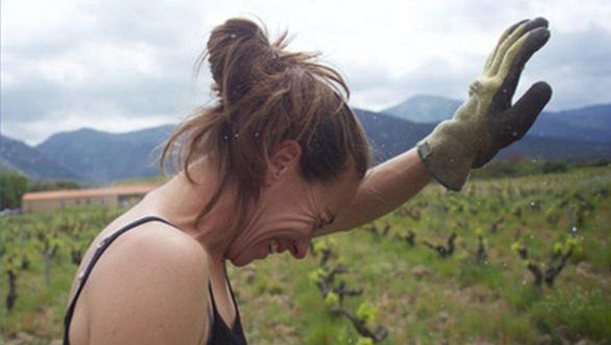 Un documentaire pédagogique qui va à la rencontre de celles et ceux qui pensent la vigne autrement.