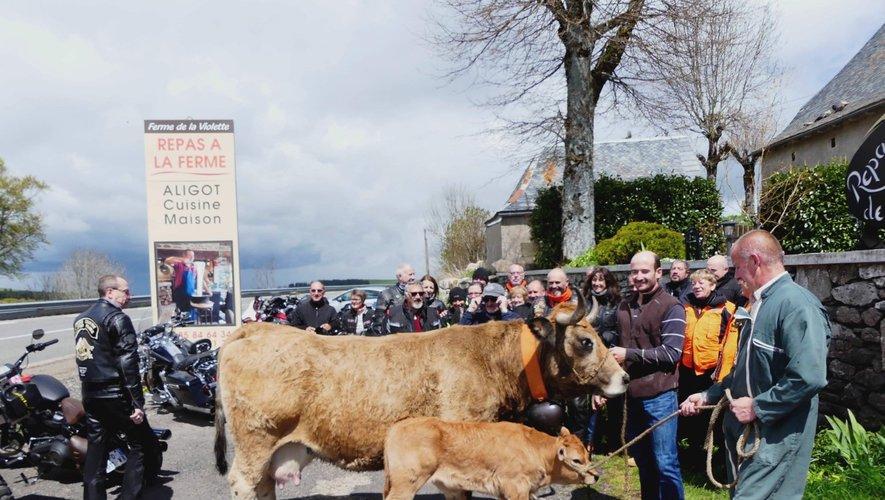 En randonnée sur l'Aubrac, le club Harley Davidson de Limoges a faitune escale gourmande à La fermede la Violette.