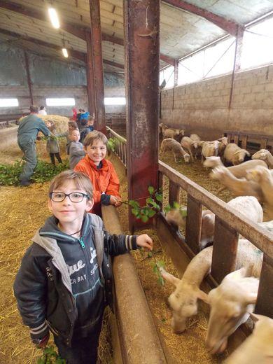 Les élèves de l'école publique de Montbazens en visite dans la bergerie de M. Boyer