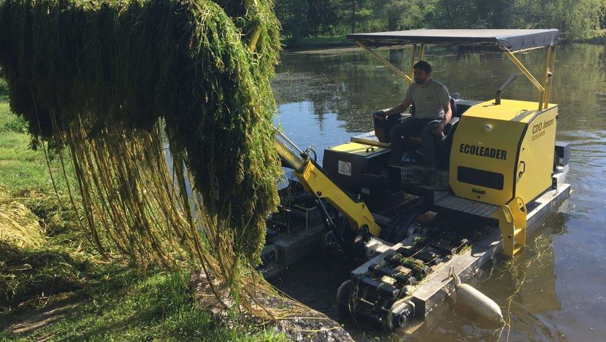 Les algues invasives retirées du lac de la Forézie.
