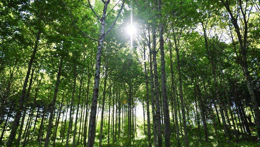 La start-up, qui emploie une quinzaine de personnes à plein temps, espère avoir acquis d'ici fin décembre 1.000 hectares de forêts dans l'Hexagone.