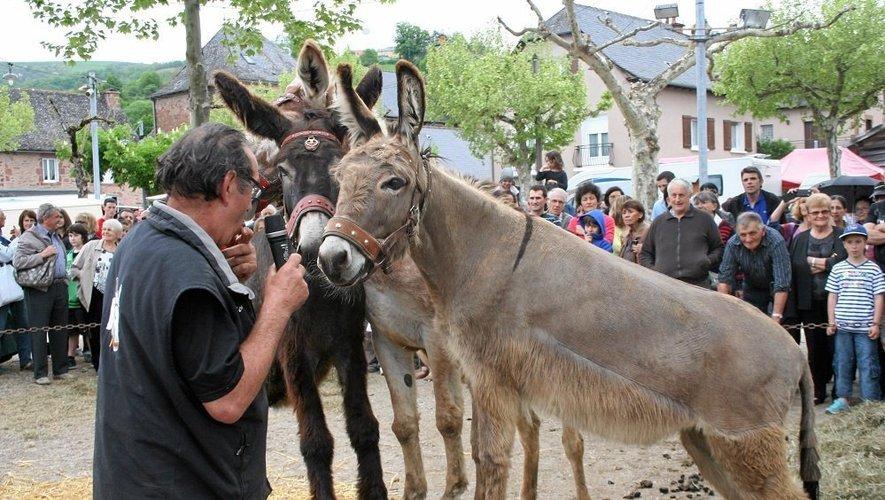 Saint-Cyprien-sur-Dourdou organise jeudi sa 23e fête des ânes et des mules et vide-greniers de 8 h à 18 h.