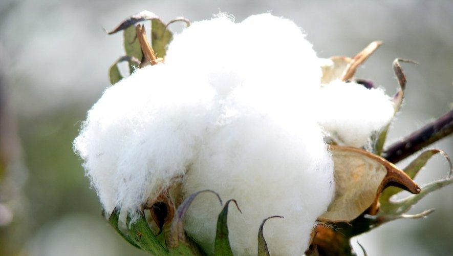 Le coton, une ressource incontournable pour l'industrie vestimentaire est l'une des plantes les plus gourmandes en eau.