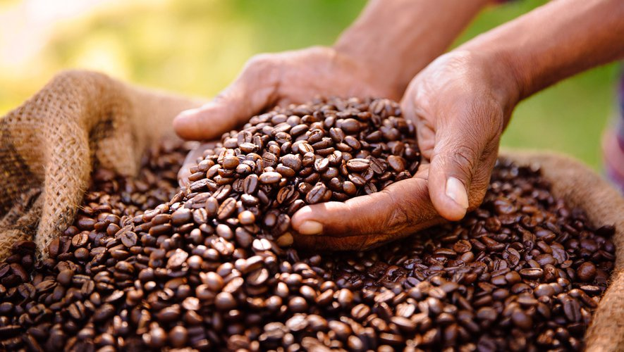 """Prescrire du café à un enfant pour supprimer les mouvements incontrôlés dus à sa maladie orpheline, puis en confirmer l'efficacité grâce à du """"déca"""" acheté par erreur: parfois, la médecine progresse grâce à des hasards étonnants."""