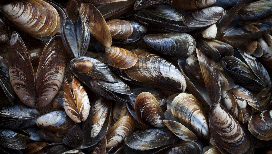 Une toxine paralysante dans des moules de Carrefour et Intermarché