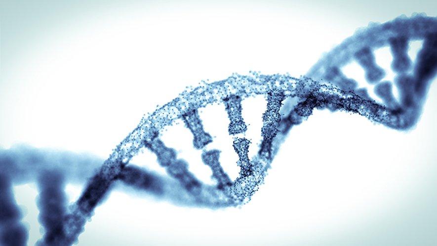 """Cette méthode, inspirée d'un mécanisme découvert dans des bactéries, consiste à couper l'ADN à un endroit précis à l'aide d'une enzyme, d'où son surnom de """"ciseaux moléculaires""""."""