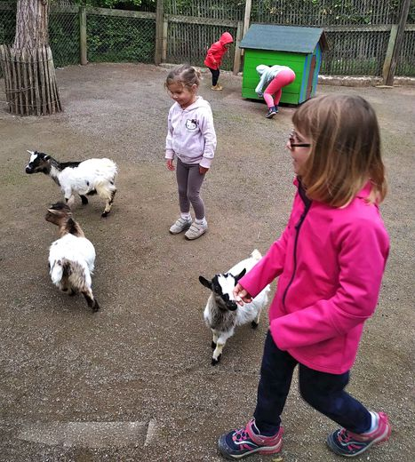 Handball et parc animalier au menu des écoliers