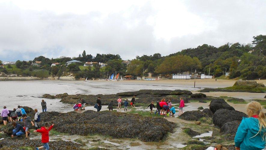 Que de découvertes dans les rochers de la plage!