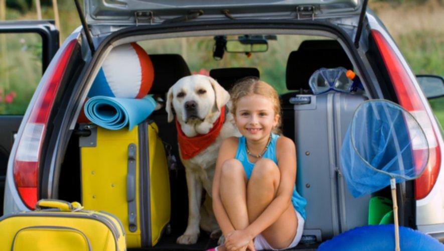 Animaux : lancement d'une plateforme pour les vacances