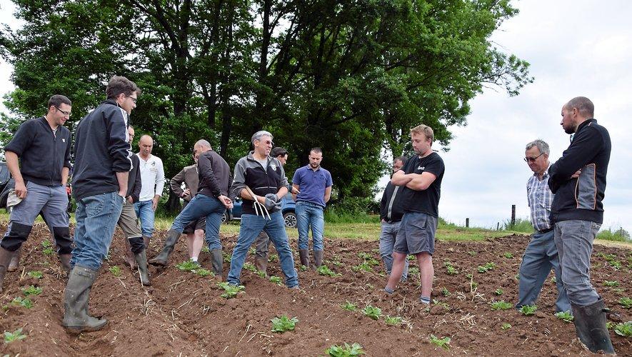 Éleveurs, expert et animateur constatent sur l'une des parcelles la bonne santé des futures pommes de terre d'Aubrac.