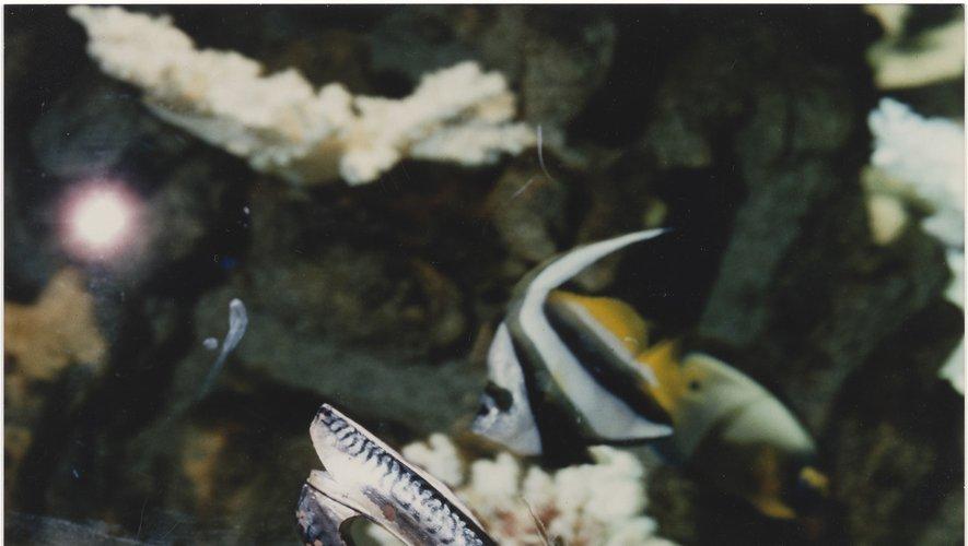 Soulier Maquereau, première création de Christian Louboutin en 1987. Visuel pris devant l'Aquarium Tropical du Palais de la Porte Dorée en 1988.
