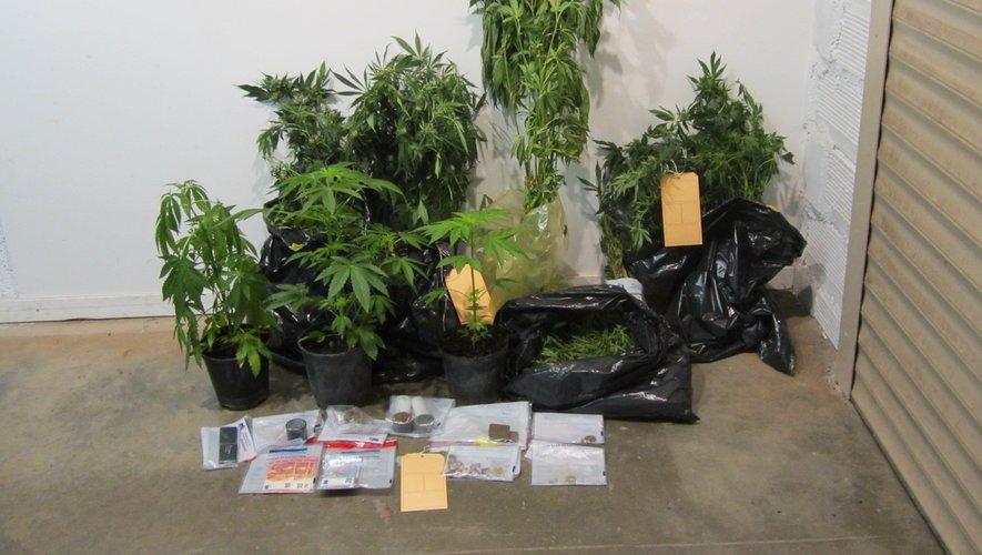21 pieds de cannabis ont notamment été saisis.