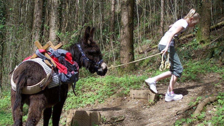 Les ânes deviennent vos compagnons de randonnée.