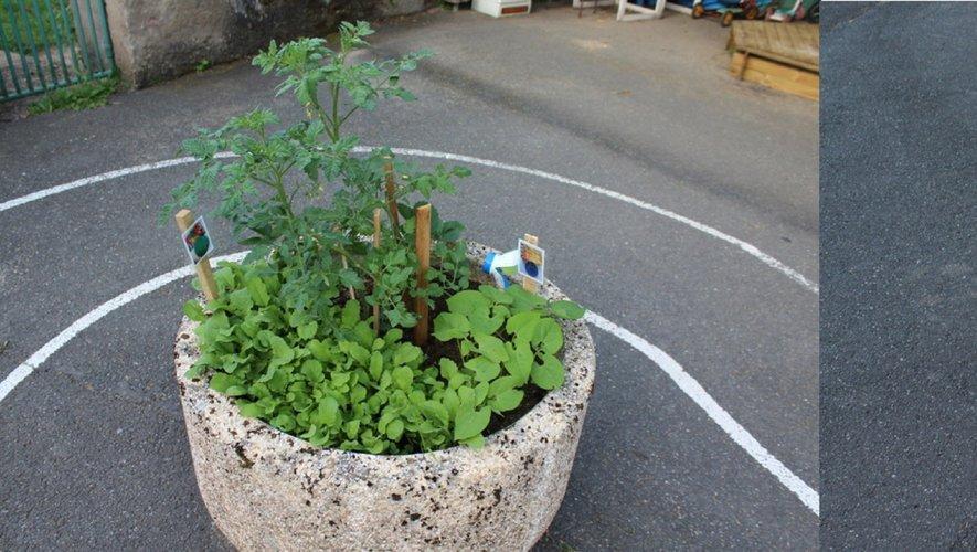 Un jardin potager à l'école