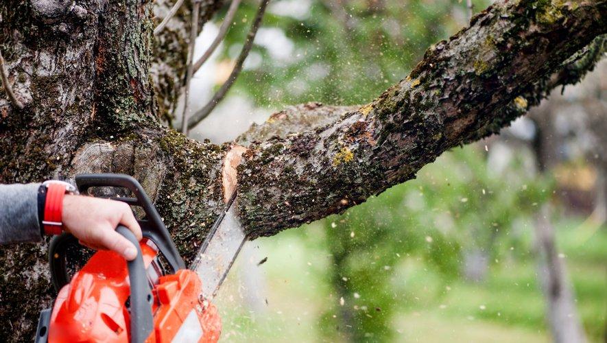 Si chacun peut exiger l'élagage des branches qui débordent sur sa propriété, encore faut-il que ce soit l'arbre d'un voisin immédiat.