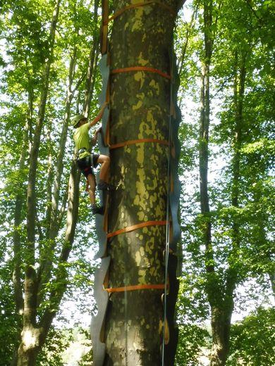 À l'ascension de l'arbre.