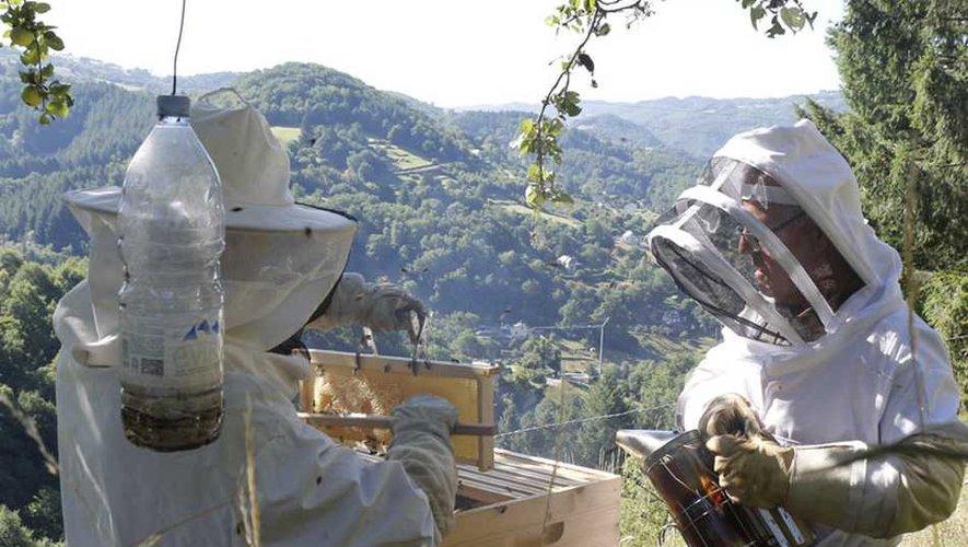 Partager sa passion avec le public pour les abeilles et le miel.