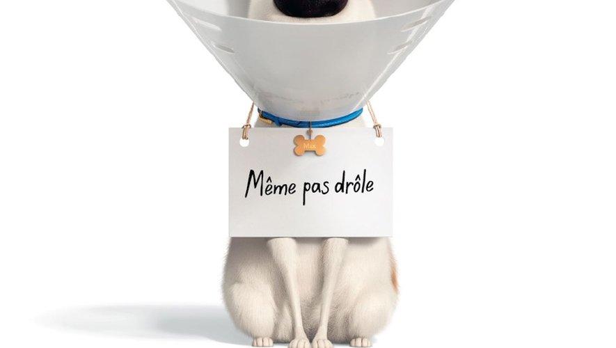 """Philippe Lacheau prête sa voix au personnage principal de """"Comme des bêtes 2"""", Max le fox-terrier."""