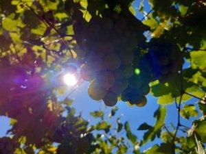 Cette année, il fallu composer avec un soleil généreux...