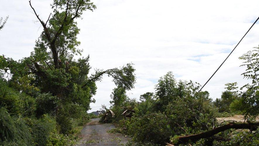 Les arbres déracinés sur les hauteurs de St-Côme ont eu raison des poteaux électriques.