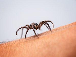 Arachnophobie : comment vaincre votre peur panique des araignées ?