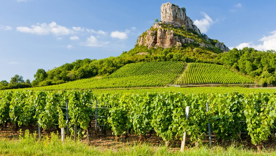 """La vigne bourguignonne """"est un marqueur du réchauffement climatique"""", selon une étude"""
