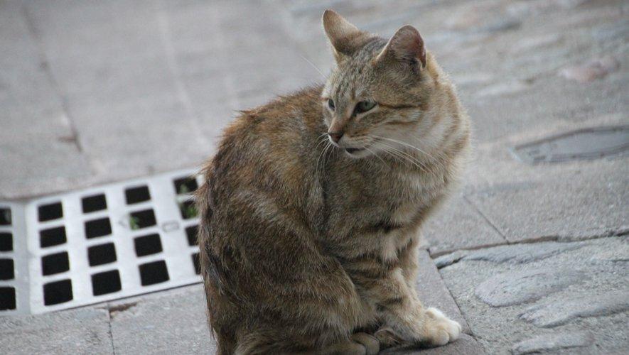 L'association recherche des fonds pour assurer la stérilisation des chats dans la ville./DDM.