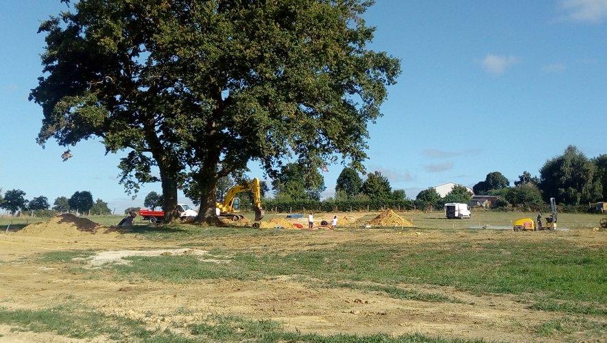 Les chênes séculaires du lotissement du « Suquet » seront conservés
