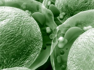 Le microbiote part en campagne