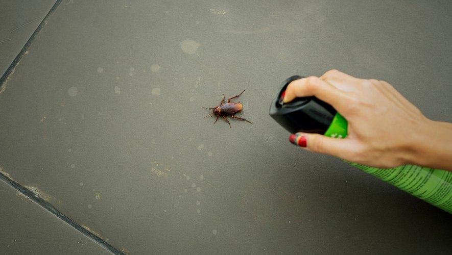 Pesticides : les Français les utilisent mal