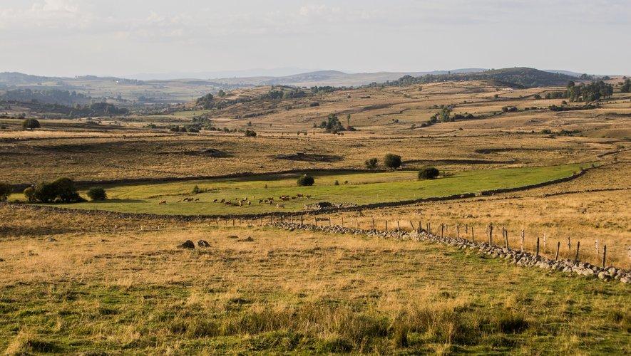 Le premier prix a été attribué à Bernard Prunières pour sa prairie située au bord de Nasbinals.